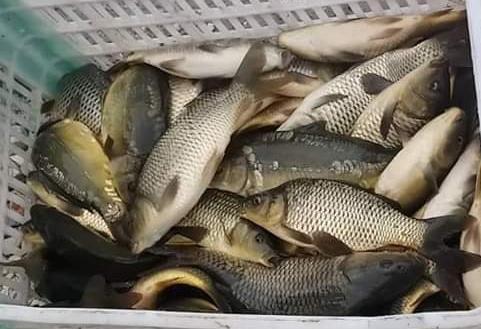 انخفاض أسعار بعض أنواع الأسماك