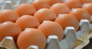 البيض يناهز 10 آلاف ليرة.. وتجار الأعلاف هم السبب!