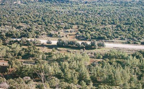 غابة الرحا تخسر أشجارها المعمرة وسعر
