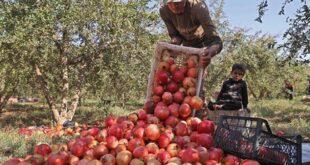 سوريا تحت شبح الفجوة الغذائية: نحو إحياء ثورة الثمانينيّات