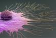 اختراق السرطان مع اكتشاف طريقة ثورية