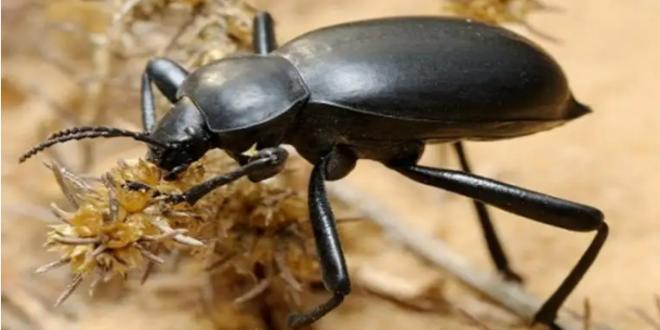 حشرات لا ينصح بقتلها
