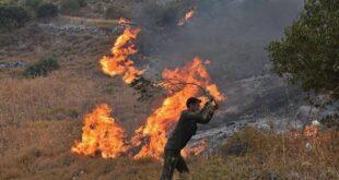 سوريا: تنفيذ حكم الاعدام ب ١٤ مجرم أشعلوا الحرائق